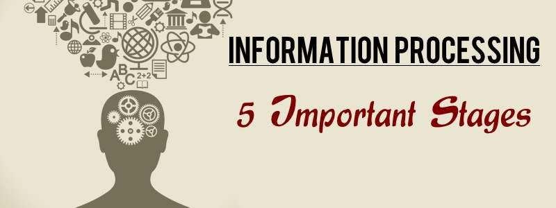 5 Important Stages in Information Processing